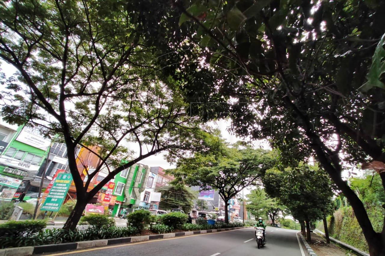 Musim Hujan, Pohon Rawan Tumbang Harus Dipangkas