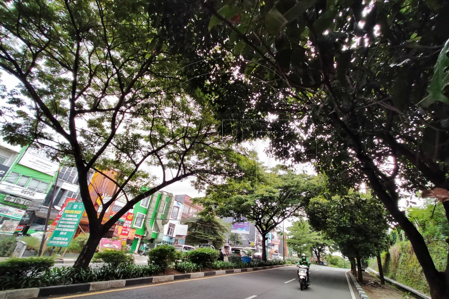 Musim Penghujan Datang, Waspada Pohon Tumbang