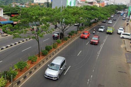 Pengawasan Pohon di Kota Depok