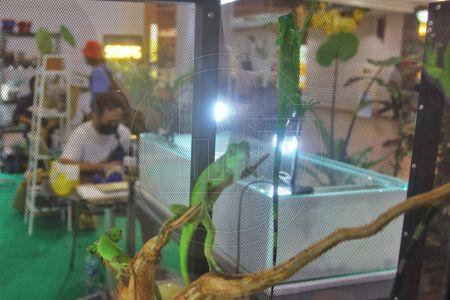 Pameran Pet & Plant Hobbies Di Margo City Depok