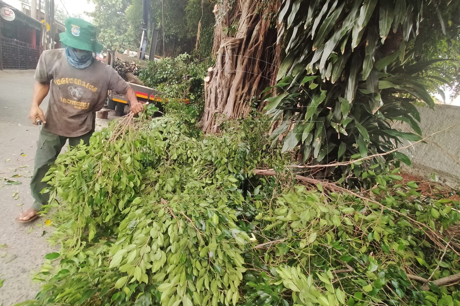 Pemkot Depok Rutin Melakukan Pengawasan Pohon