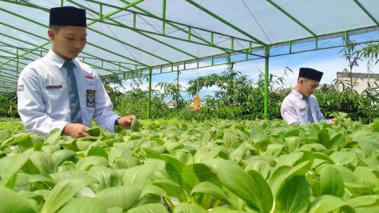 Menengok Santri Bertani Tanaman Hidroponik