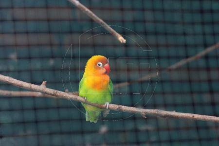 Hobi Burung Lovebird Jadi Peluang Bisnis