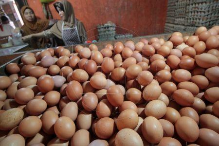 Harga Telur Alami Penurunan